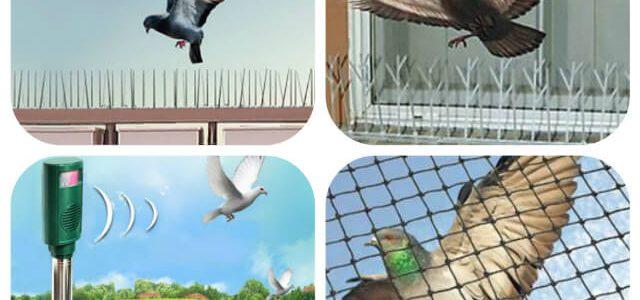 شركة تركيب طارد الحمام والطيور بجدة